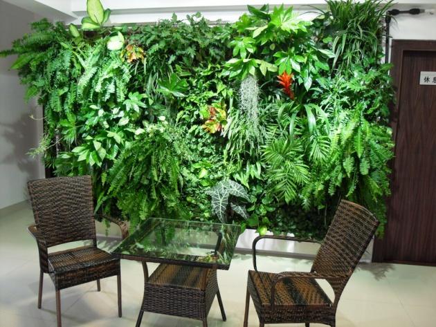 资料图 如仙客来,由于其色彩丰富、热烈,比较适合欧式风格,但由于其属暖温带植物,不适合室内长期种植,只能随时更换。 一般选用如金钱树、滴水观音、发财树等观叶、观茎类植物配合中式风格。中式风格往往注重形,观叶、观茎、观根类植物较合适。此外,现代风格的装修可选用中式盆栽,只要排除过于装饰性的元素,在器皿选择搭配上偏向自然风格即可。 从区域角度考虑,卧室不建议摆放太多植物,特别是观叶类植物,因晚上这类植物会与人争夺氧气。厨房由于油烟较大,不适宜放置植物,若放则可选择水培植物,给人纯净、干净的感觉。 客厅由于