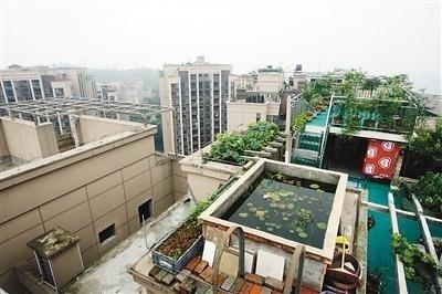 重庆最牛违建:顶楼变别墅 23层楼顶建游泳池
