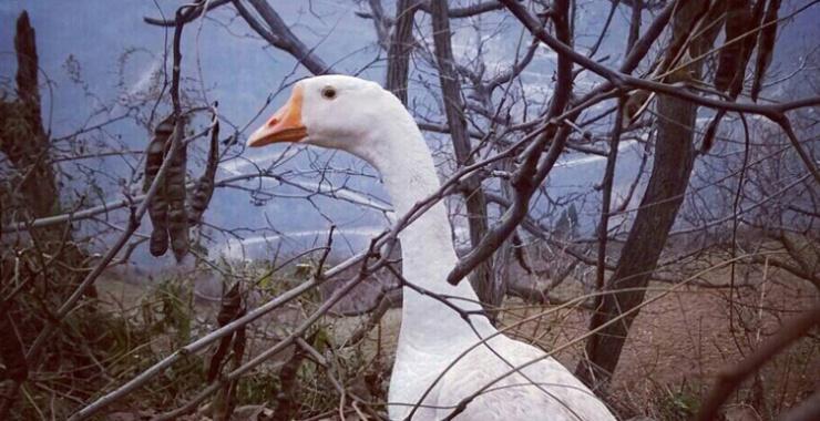 诗人终南山隐居20年 住土屋与鸡鸭鹅狗为伴 - 子泳 - 子泳WZ的博客