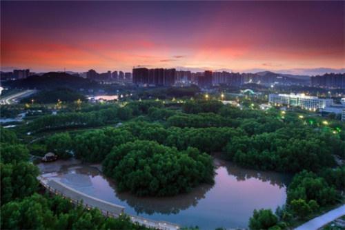 2000年的红树林公园,老照片由卢晓提供